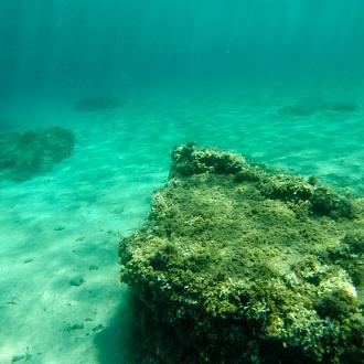 Paesaggi subacquei